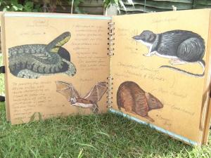 Garden Creatures photograph