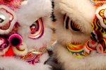 Lions close up Photo